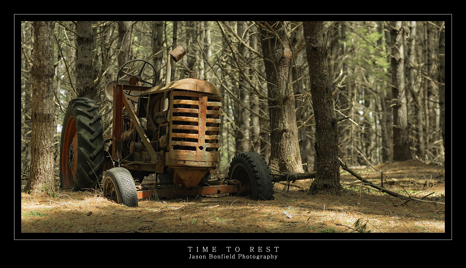 An old derelict and disused red farm tractor left ot rust away in an old pine forest bathed with soft light filtering through the trees