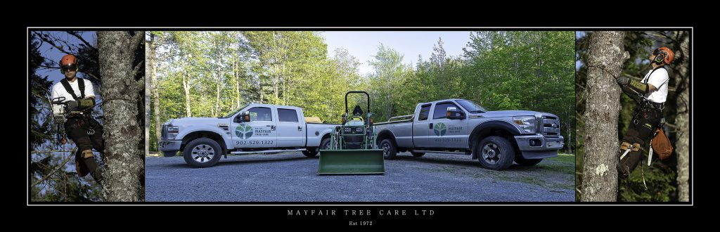 Commercail business picture for Abrourist tree care company with two pick up trucks a green john dere tractor and twoimages of a an arbourist working in a tree cutting branches